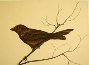 Dalton Canyon Winter Sparrow